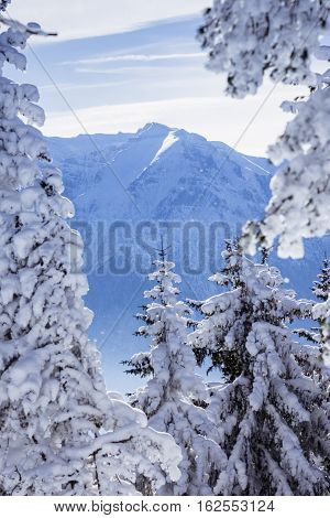 Winter landscape with snow covering the fir trees and the nowy peak of a mountain in the distance in Poiana Brasov Romania