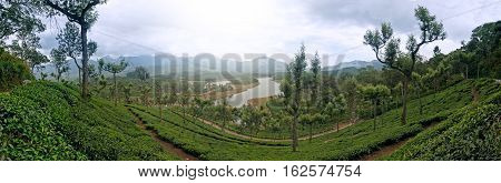 Panoramic view in Munnar in western Ghats Kerala Idukki district India