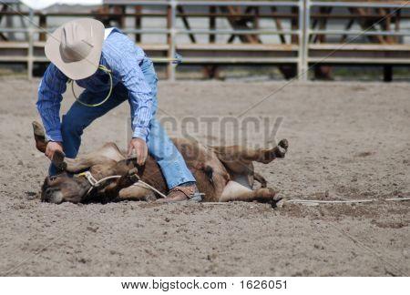 Cowboy Calf Roping