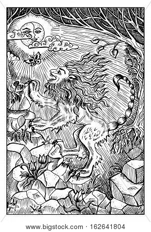 Manticore. Monster with lion body, human face. Fantasy magic creatures collection. Hand drawn vector illustration. Engraved line art drawing, graphic mythical doodle. Template for card game, poster