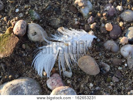 White feather with water drop, on the beach in a sunny day