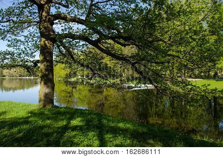 Tree On The Bank Of The Pond