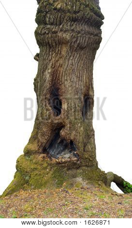 Wood-Goblin
