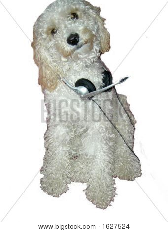 Cão de fone de ouvido