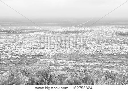 In South Africa Close Up Of The Colza       Field