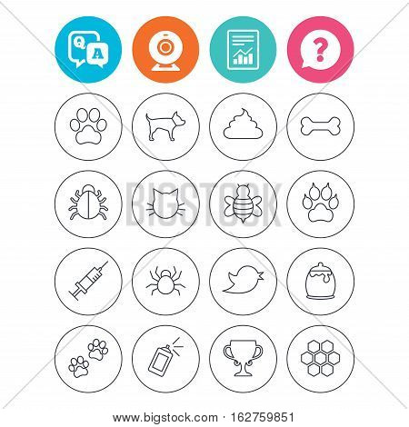 Pets and Insects icons. Dog paw. Cat paw with clutches. Bone, feces excrement and vaccination. Honey, bee and honey comb. Report document, question and answer icons. Web camera sign. Vector