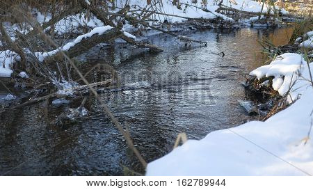 Forest river flowing water late winter melted ice nature landscape, arrival of spring