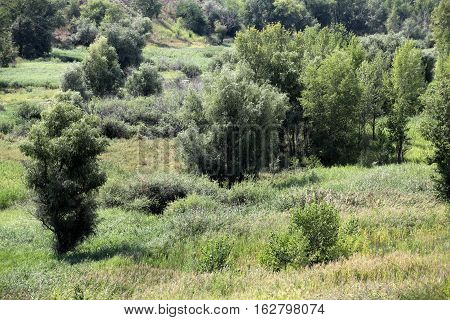 tree and wild grasses in hilly scenic landscape
