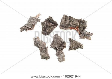 The bark of the tree isolated on white. Mock up. The bark of the juniper or fir.