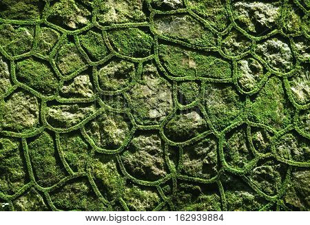 background, block, closeup, consortium, construction, design, fungi, fungus, garden, grass, green, lichen, masonry, moss, mossy, natural, nature, old, oriental, pattern, plant, rock, stone, surface, texture, tropical, wall, weathered