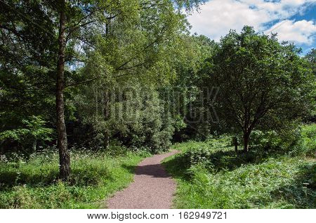 Summertime walks in the woodlands of Shropshire, England.