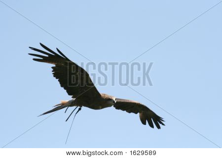 Falcon Gliding
