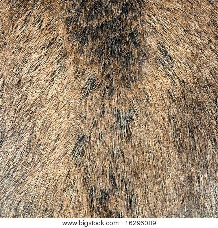 Haut ein wild Wildschwein