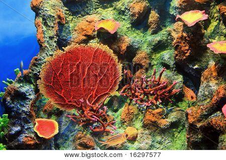 Die Unterwasser-Welt, Andamanensee