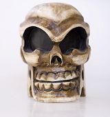 stock photo of unnerving  - Model Human Skull - JPG