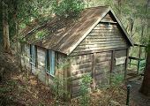 picture of wooden shack  - Old log hut hidden away in the bush - JPG