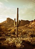 picture of wild west  - Wild west desert trail to Superstition Mountain with Saguaro cactus tree - JPG