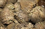 stock photo of jericho  - rose of jericho - JPG