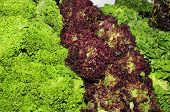 image of escarole  - some different types of escarole endive on a marketplace - JPG