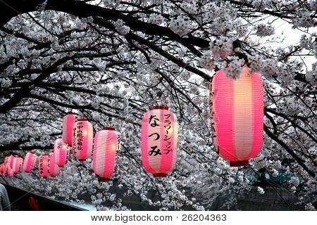 Japanese lanterns on cheery blossom tree