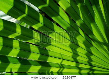 Palm leaf with shadow