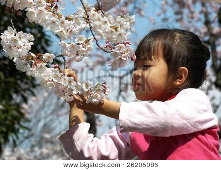 Little girl appreciating cherry blossom in Tokyo