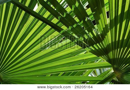 Underneath the palm leaves