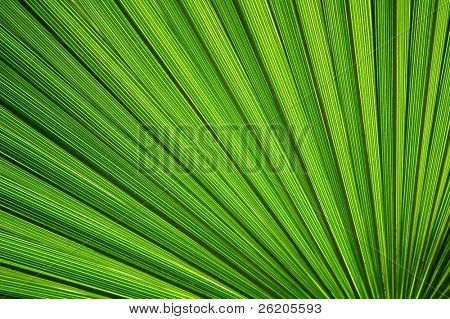 Palm leaf perspective