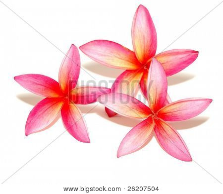 Isolated plumeria