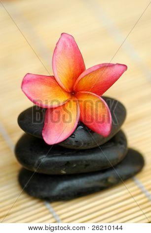 Tropical frangipani on black stone
