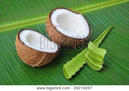 Coconut and aloe vera, alternative treatment for hair