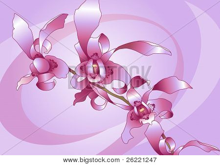 Sprig Of Orchid