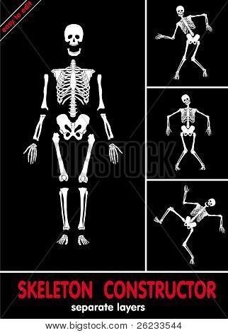 Skeleton construct