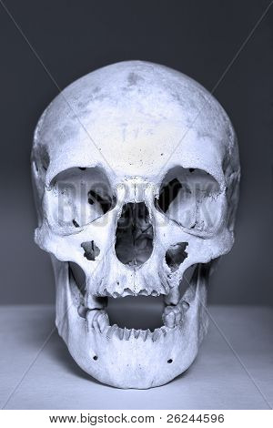 white skull in blue