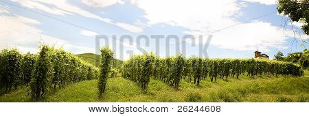 view on a vineyard