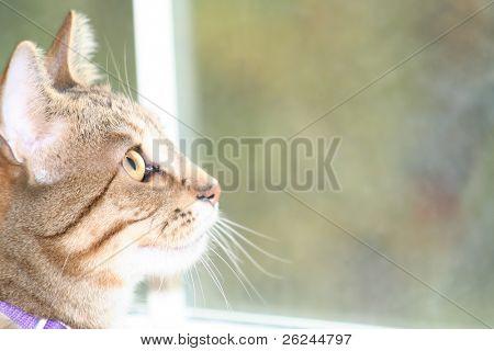 Verträumter Katze