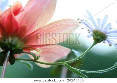 weiche floral Schuss von unten mit geringe Schärfentiefe