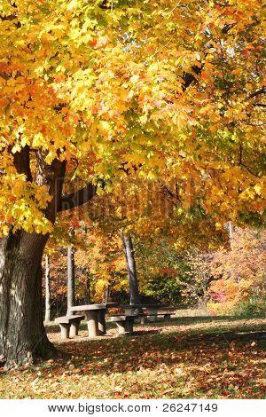 ideal für ein Herbst Picknick im Wald