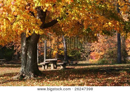 Picnic table in the park with colorful foliage