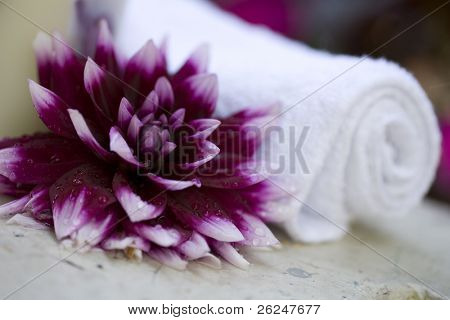 Grand dahlia with a rolled towel for a spa concept