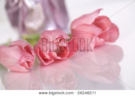 Pink tulips with a soft reflection
