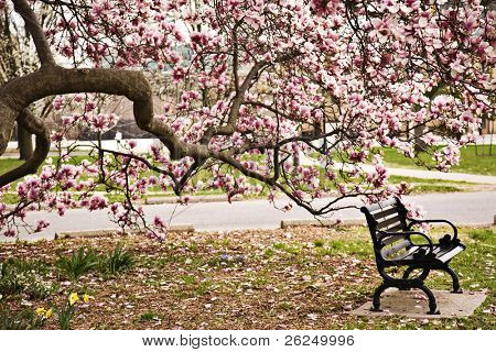 Park bench under the magnolia tree in Goodale Park in Columbus, Ohio