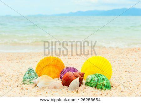Set Of Seashells On The Sea Beach