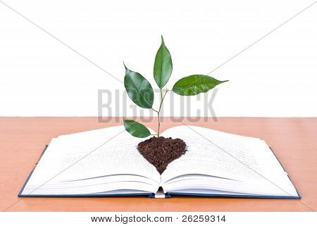 Book And Tree Isolated On White Background
