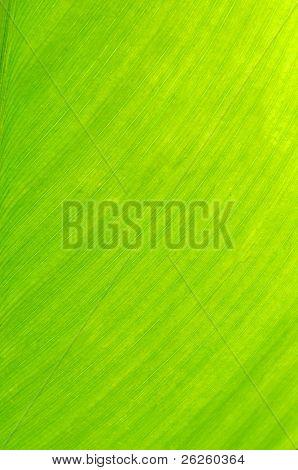 banana leaf green floral natural background