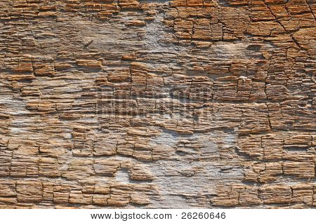 dry driftwood texture