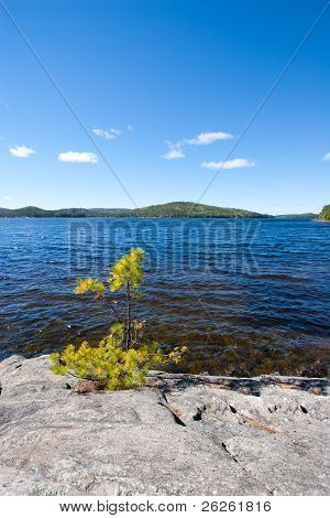 Solitary Pine Tree Sapling Growing Out Of Granite On Shore Of Lake