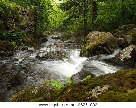 forest mountain stream Smolny in russian Primorye Reserve