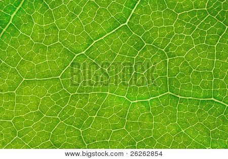 structure of green leave natural background