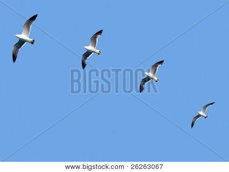 birds following the leader team concept